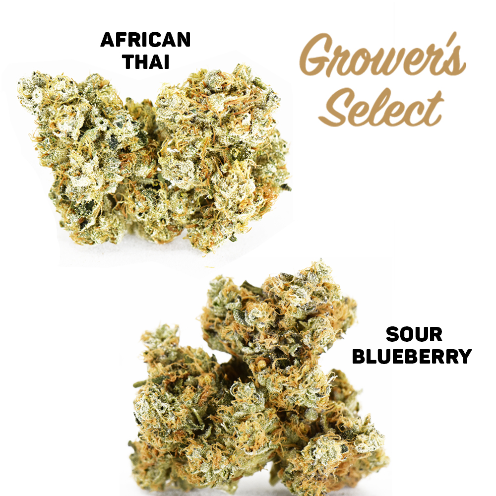 Grower's Select: African Thai #15 and Sour Blueberry #2